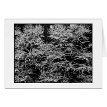 'Winter Abstract' Holiday Card - Christmas