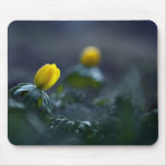 Winter aconite mouse pad