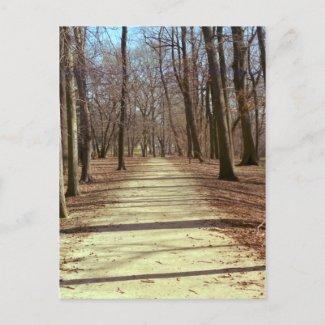 Winter Afternoon Postcard postcard