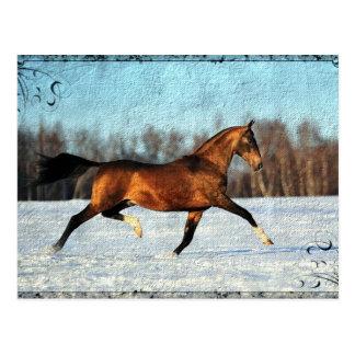 Winter Akhal-teke Postcard