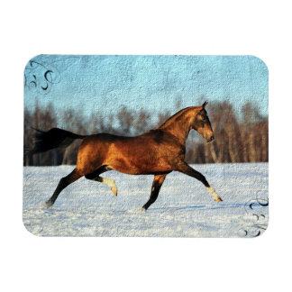Winter Akhal-teke Rectangular Photo Magnet