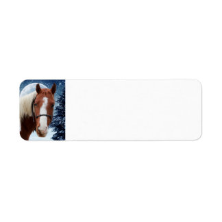 Winter American Paint Horse Label