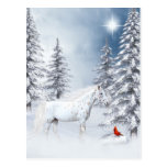 Winter appaloosa postcard