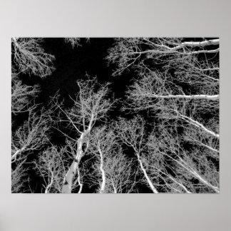 Winter Aspen Trees - Black Sky Poster