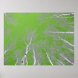Winter Aspen Trees - Green Sky Poster