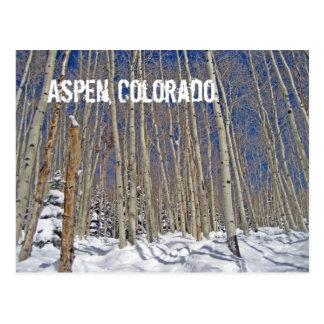 Winter Aspen Trees in Aspen, Colorado Postcard