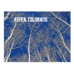 Winter Aspen Trees in Aspen, Colorado Postcards