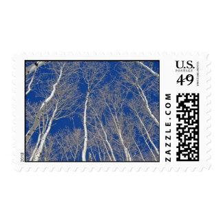 Winter Aspen Trees Postage