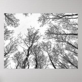 Winter Aspen Trees - White Sky Poster