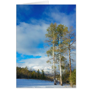 Winter Aspens Stationery Note Card