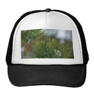 Winter At Bryce Canyon. Mesh Hat