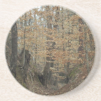 Winter at Sunken Trace Natchez Trace Parkway MS Coaster