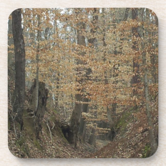 Winter at Sunken Trace Natchez Trace Parkway MS Beverage Coasters