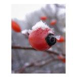 Winter Berries Customized Letterhead