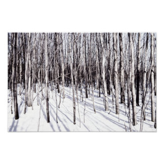 Winter Birch, Tree Snow Forest Branches Nature Poster