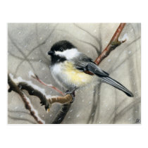 winter bird chickadee postcard