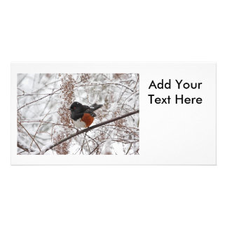 Winter Bird in the Snow Photo Cards
