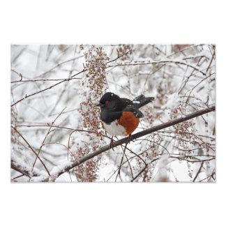 Winter Bird in the Snow Photograph