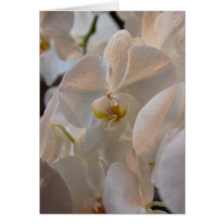 Winter Bloom III Card