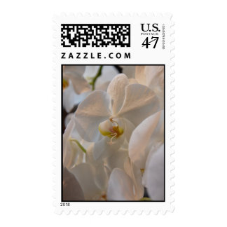 Winter Bloom III Postage