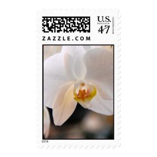 Winter Bloom IV Postage
