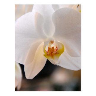 Winter Bloom IV Postcard
