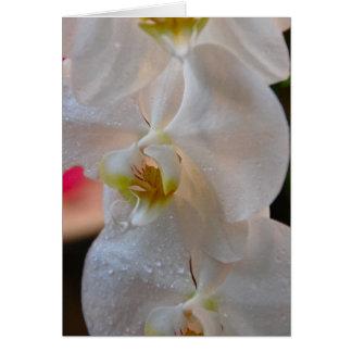 Winter Bloom IX Card