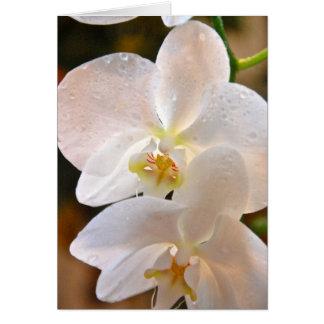 Winter Bloom VIII Card