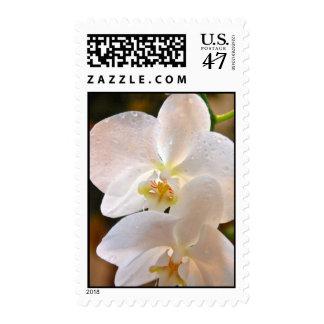 Winter Bloom VIII Postage
