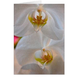 Winter Bloom XI Card