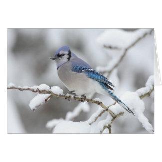 Winter Blue Jay Card