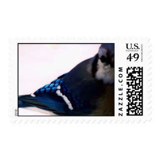 Winter Blue Jay Stamps