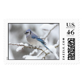 Winter Blue Jay Postage Stamps