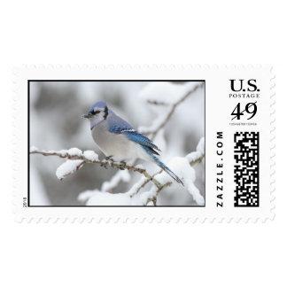 Winter Blue Jay Postage