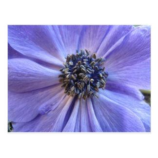 Winter Blue Postcard