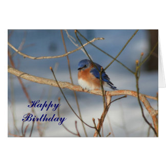 Winter Bluebird Animal Photography Birthday Card