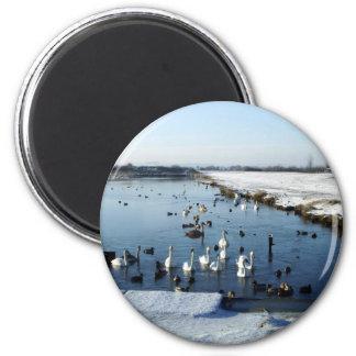 Winter boating lake scene with birds feeding. 2 inch round magnet