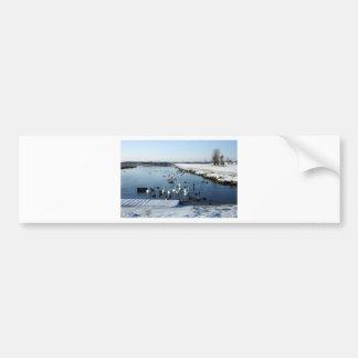 Winter boating lake scene with birds feeding. car bumper sticker