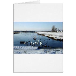 Winter boating lake scene with birds feeding. greeting card