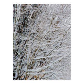 Winter Branches Postcard