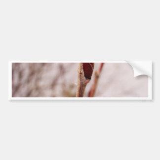 Winter Bud Bumper Sticker