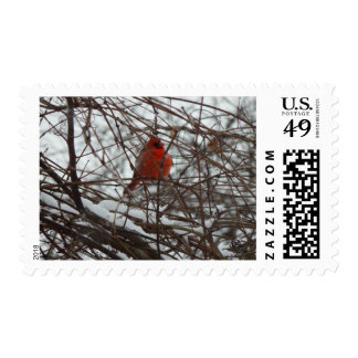 Winter Cardinal Postage