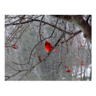 Winter cardinal postcard
