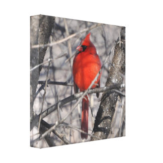 Winter Cardinal Wrapped Canvas