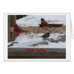 Winter Cardinals & Junco Cards