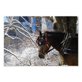 Winter Carriage Horse Photo Print