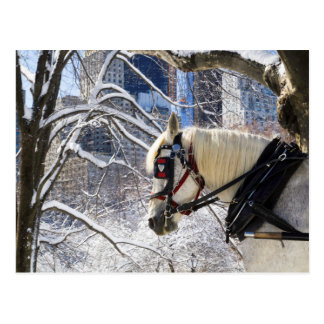 Winter Carriage Horse Postcard