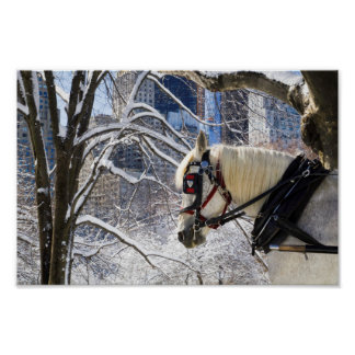 Winter Carriage Horse Poster