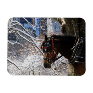 Winter Carriage Horse Rectangular Photo Magnet
