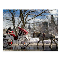 Winter Carriage Horses in Central Park Postcard